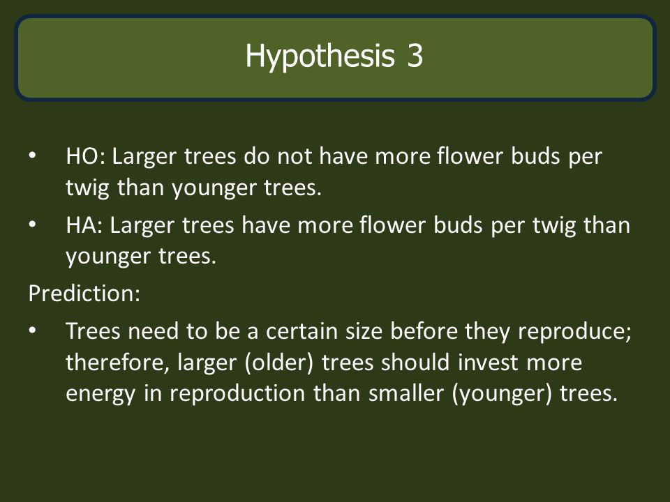 Age & Reproduction HO: Larger trees do not have more flower buds per twig than younger trees. HA: Larger trees have more flower buds per twig than you