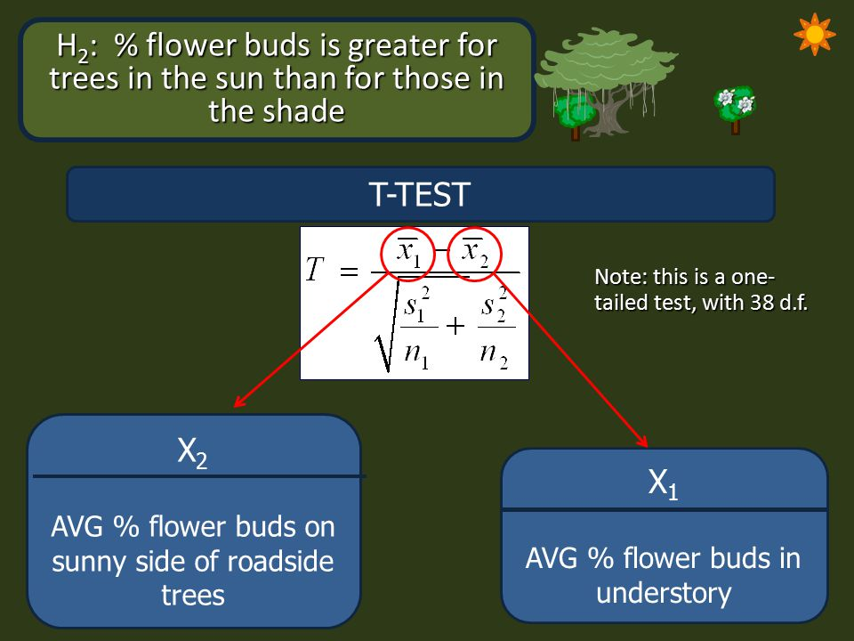 H 2 : % flower buds is greater for trees in the sun than for those in the shade T-TEST X 1 AVG % flower buds in understory X 2 AVG % flower buds on su