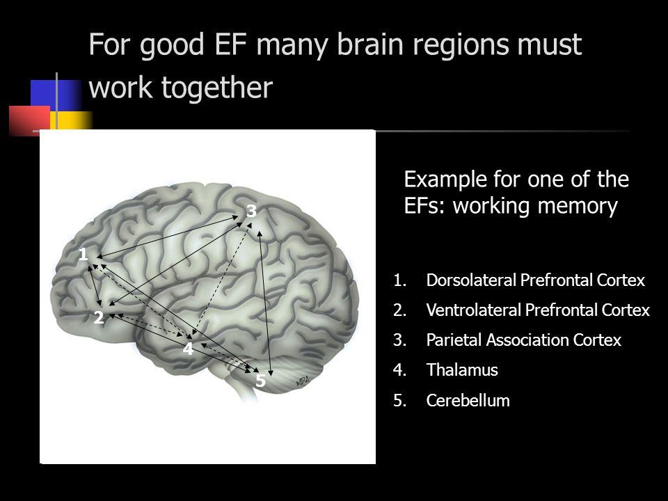 For good EF many brain regions must work together 3 5 2 1 4 1.Dorsolateral Prefrontal Cortex 2.Ventrolateral Prefrontal Cortex 3.Parietal Association