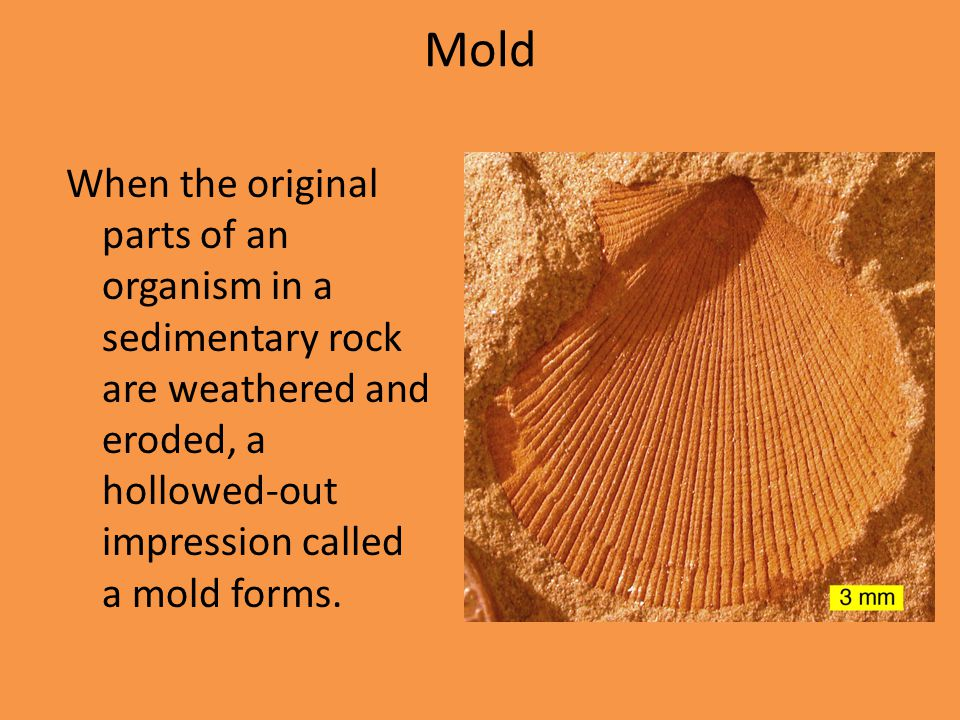 Mold When the original parts of an organism in a sedimentary rock are weathered and eroded, a hollowed-out impression called a mold forms.