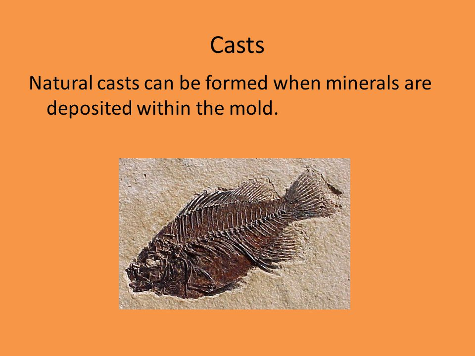 Casts Natural casts can be formed when minerals are deposited within the mold.