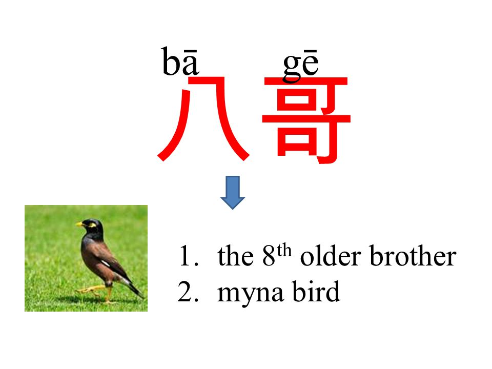 八哥 bā gē 1.the 8 th older brother 2.myna bird