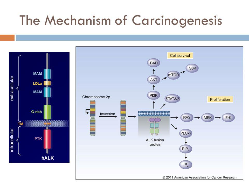 The Mechanism of Carcinogenesis