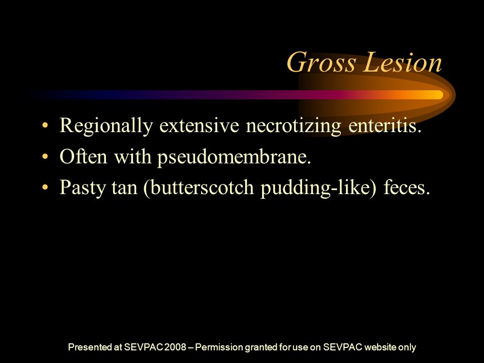 Gross Lesion Regionally extensive necrotizing enteritis. Often with pseudomembrane. Pasty tan (butterscotch pudding-like) feces. Presented at SEVPAC 2