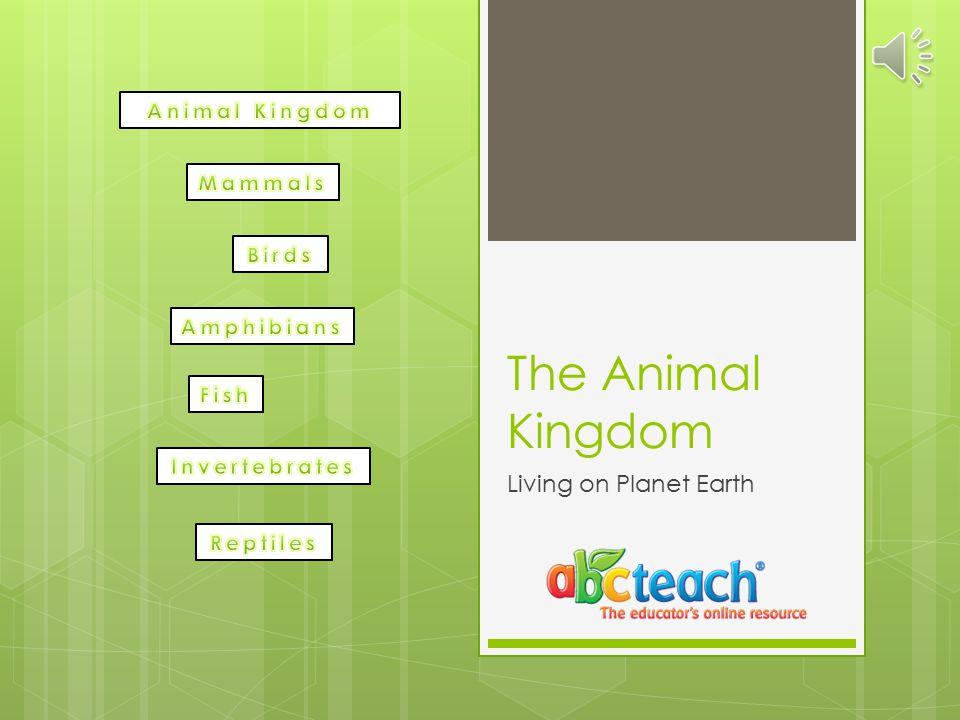 Animal Kingdom  Would you like to learn more.