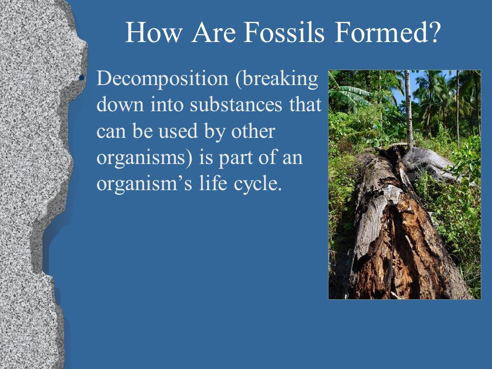 Species and Environmental Changes Fossils provide evidence of how life and environmental conditions have changed throughout time.