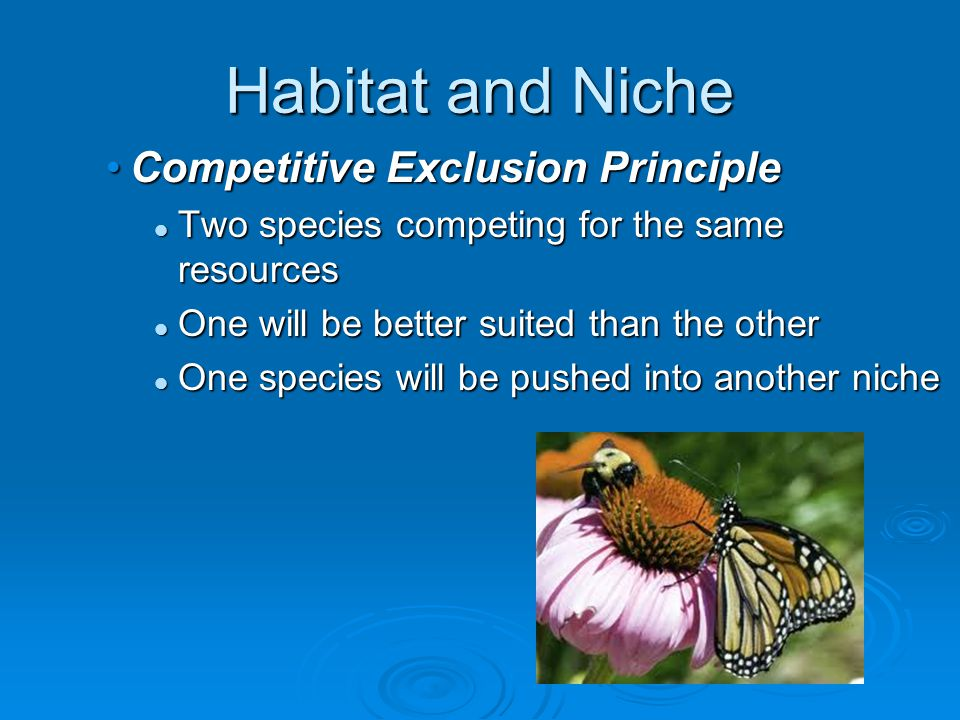 Habitat and Niche Competitive Exclusion Principle Two species competing for the same resources One will be better suited than the other One species wi