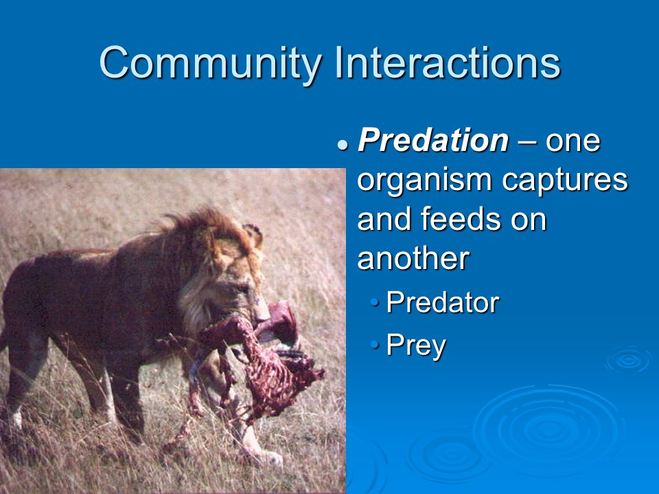 Community Interactions Predation – one organism captures and feeds on another Predator Prey