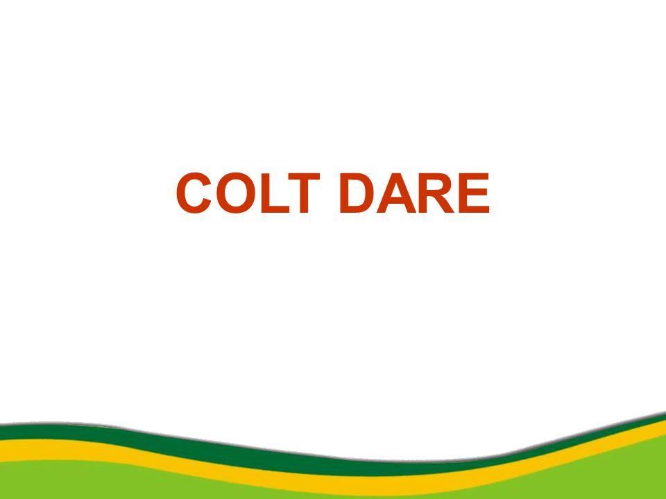 COLT DARE