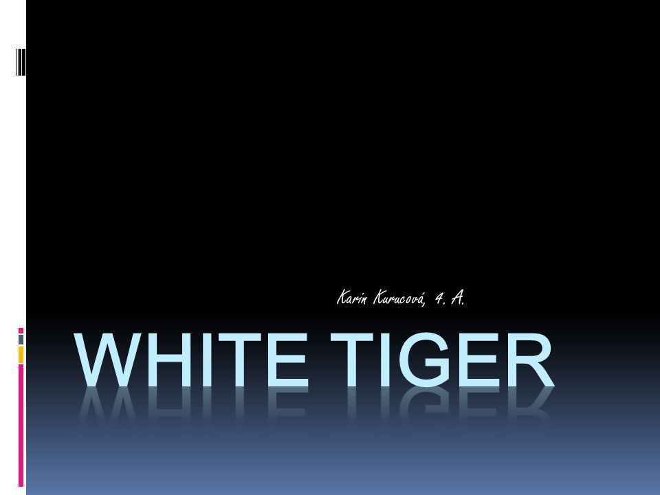 White tiger  There are less than 5000white tigers in the world.