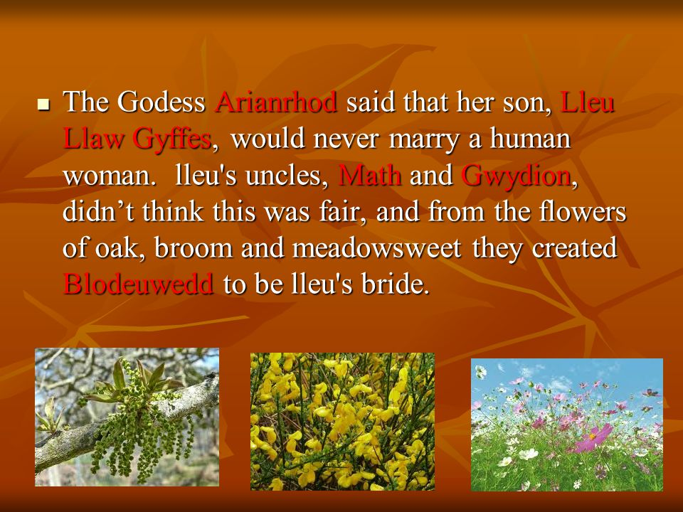 The Godess Arianrhod said that her son, Lleu Llaw Gyffes, would never marry a human woman.