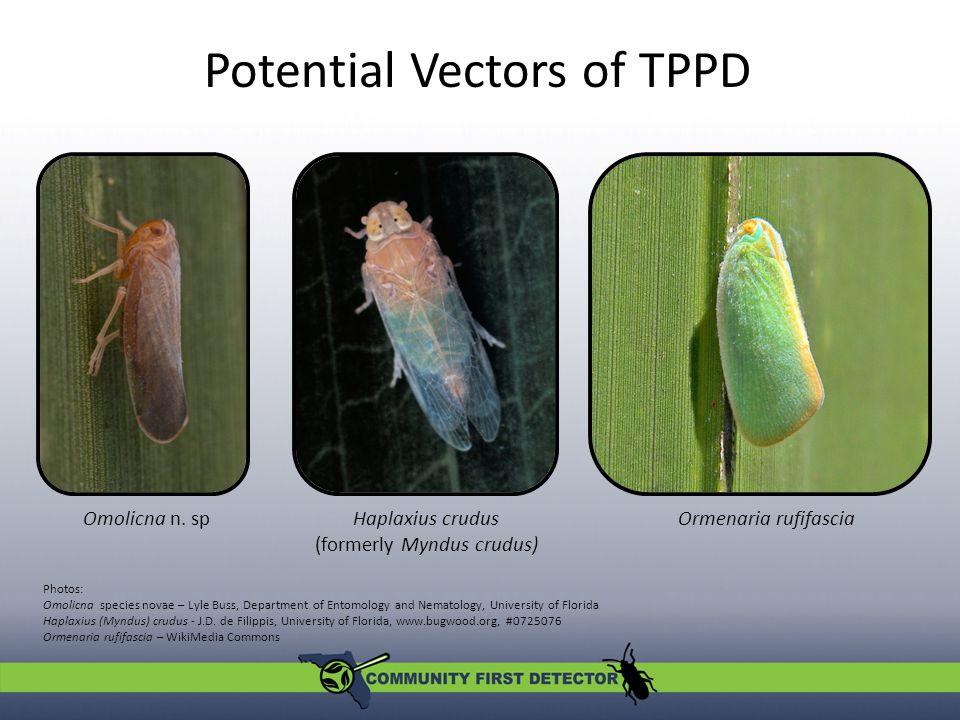 Potential Vectors of TPPD Omolicna n.