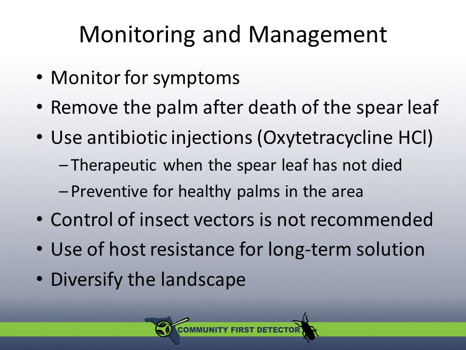 Monitoring and Management Monitor for symptoms Remove the palm after death of the spear leaf Use antibiotic injections (Oxytetracycline HCl) –Therapeutic when the spear leaf has not died –Preventive for healthy palms in the area Control of insect vectors is not recommended Use of host resistance for long-term solution Diversify the landscape