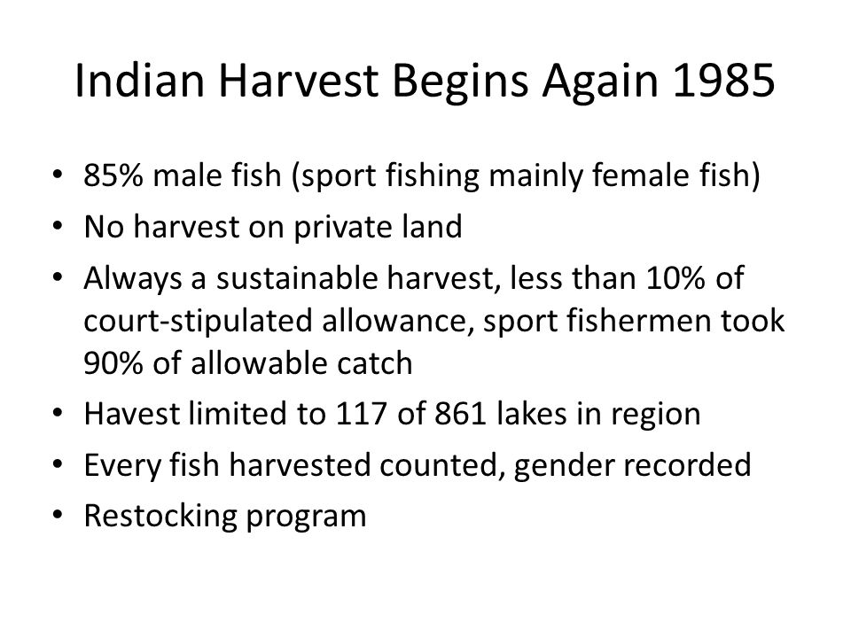 Indian Harvest Begins Again 1985 85% male fish (sport fishing mainly female fish) No harvest on private land Always a sustainable harvest, less than 10% of court-stipulated allowance, sport fishermen took 90% of allowable catch Havest limited to 117 of 861 lakes in region Every fish harvested counted, gender recorded Restocking program