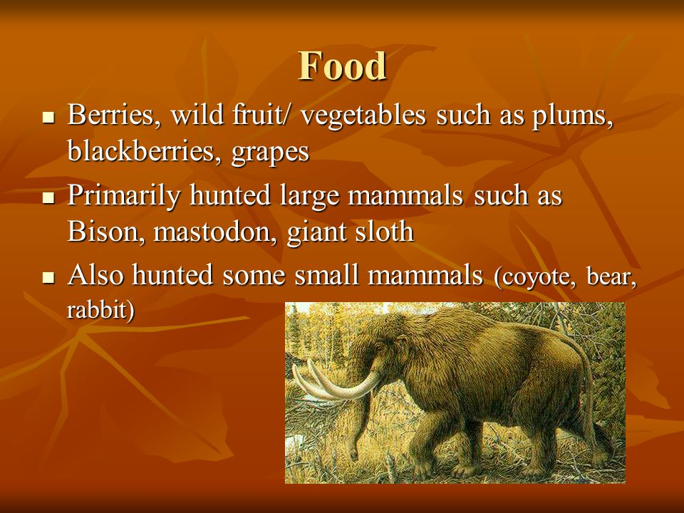 Food Berries, wild fruit/ vegetables such as plums, blackberries, grapes Berries, wild fruit/ vegetables such as plums, blackberries, grapes Primarily hunted large mammals such as Bison, mastodon, giant sloth Primarily hunted large mammals such as Bison, mastodon, giant sloth Also hunted some small mammals (coyote, bear, rabbit) Also hunted some small mammals (coyote, bear, rabbit)
