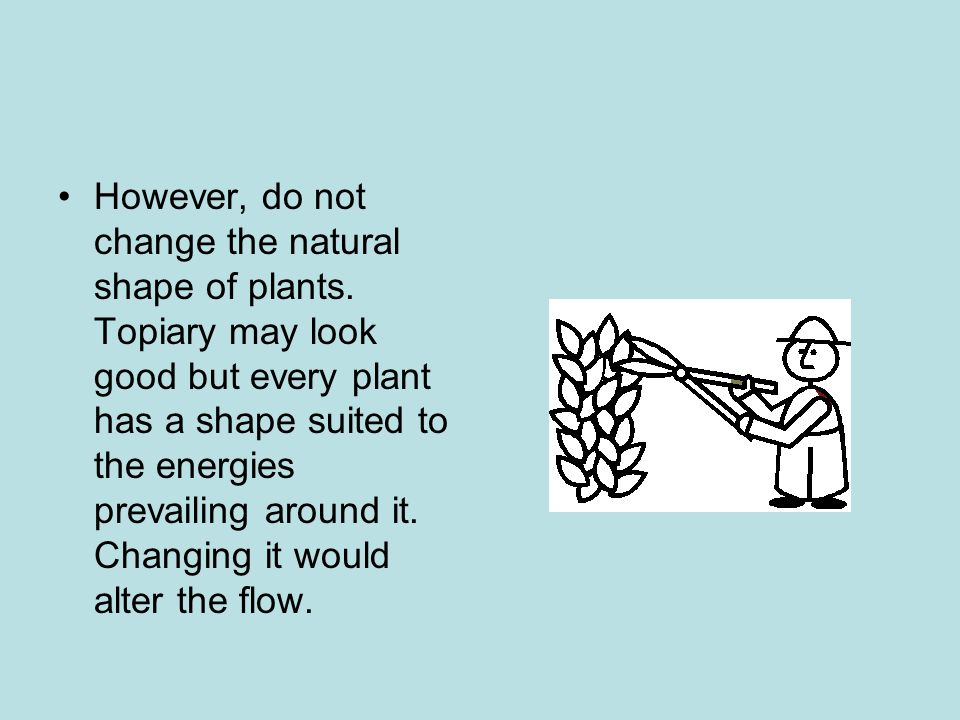 However, do not change the natural shape of plants.