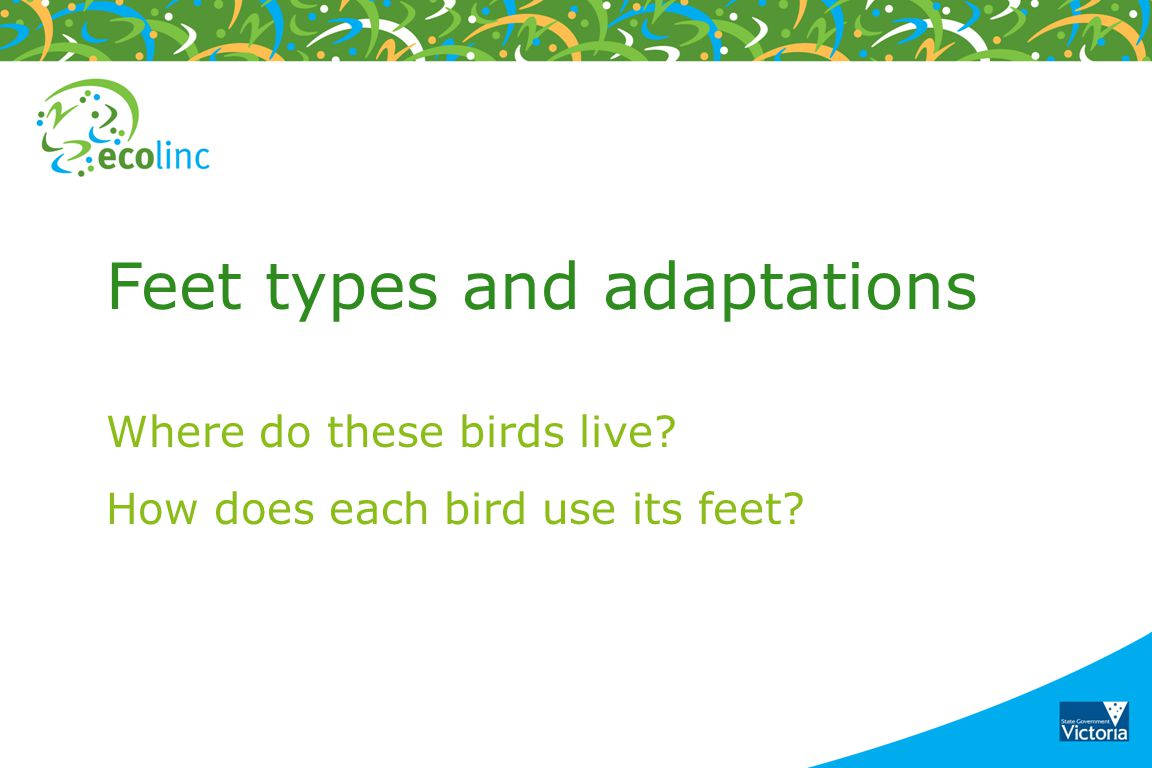 Feet types and adaptations Where do these birds live? How does each bird use its feet?