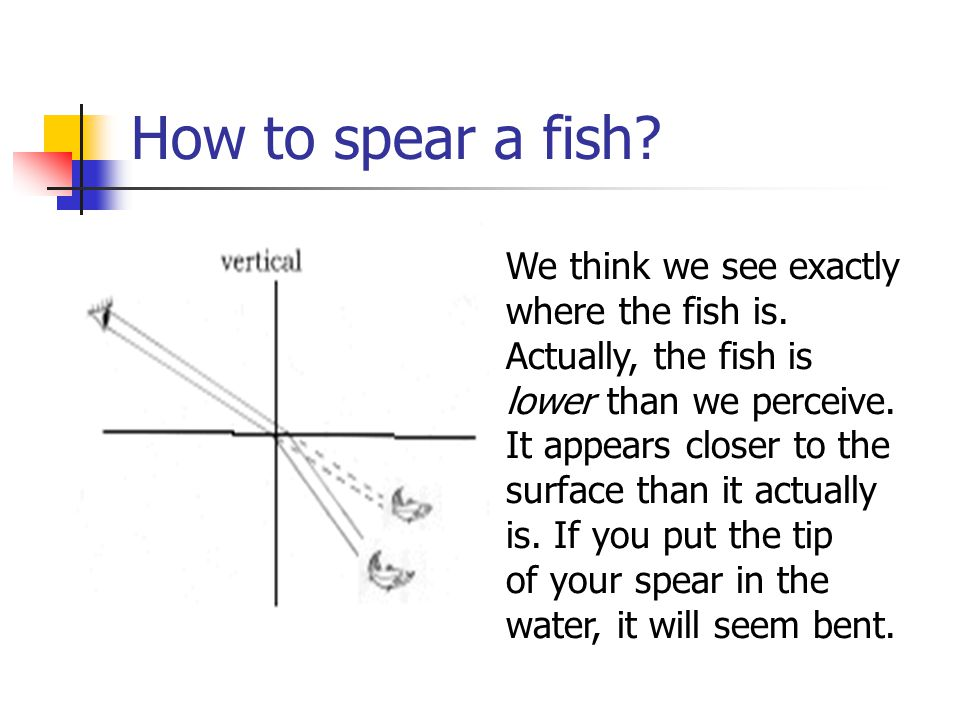 How to spear a fish. We think we see exactly where the fish is.
