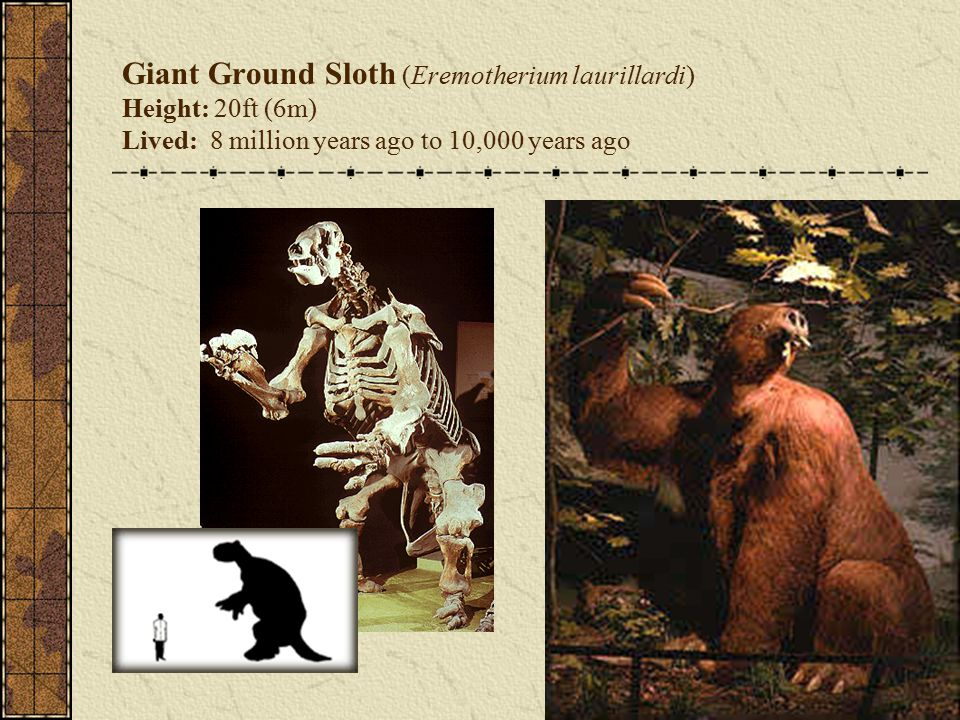 Giant Ground Sloth (Eremotherium laurillardi) Height: 20ft (6m) Lived: 8 million years ago to 10,000 years ago