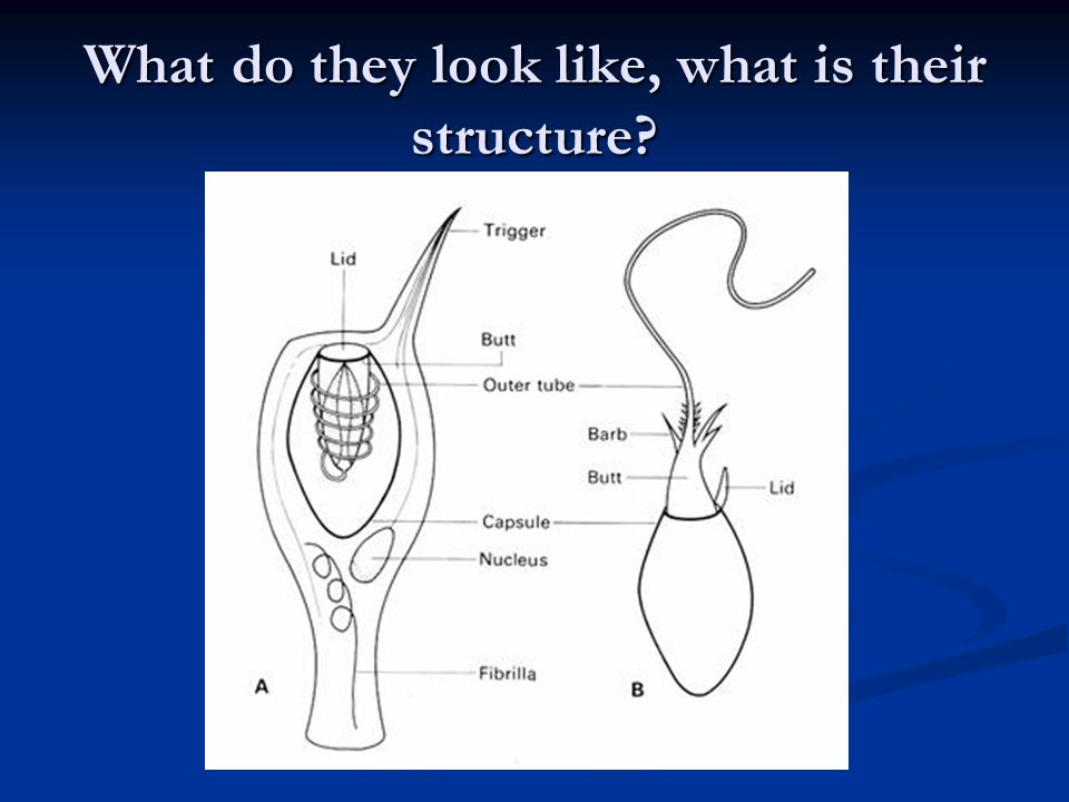 What do they look like, what is their structure?