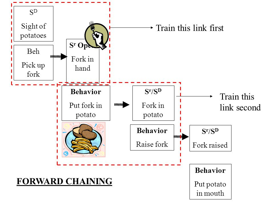Forward Chain The establishment of the first link in a behavioral chain, with the addition of successive links, until the final link in acquired.