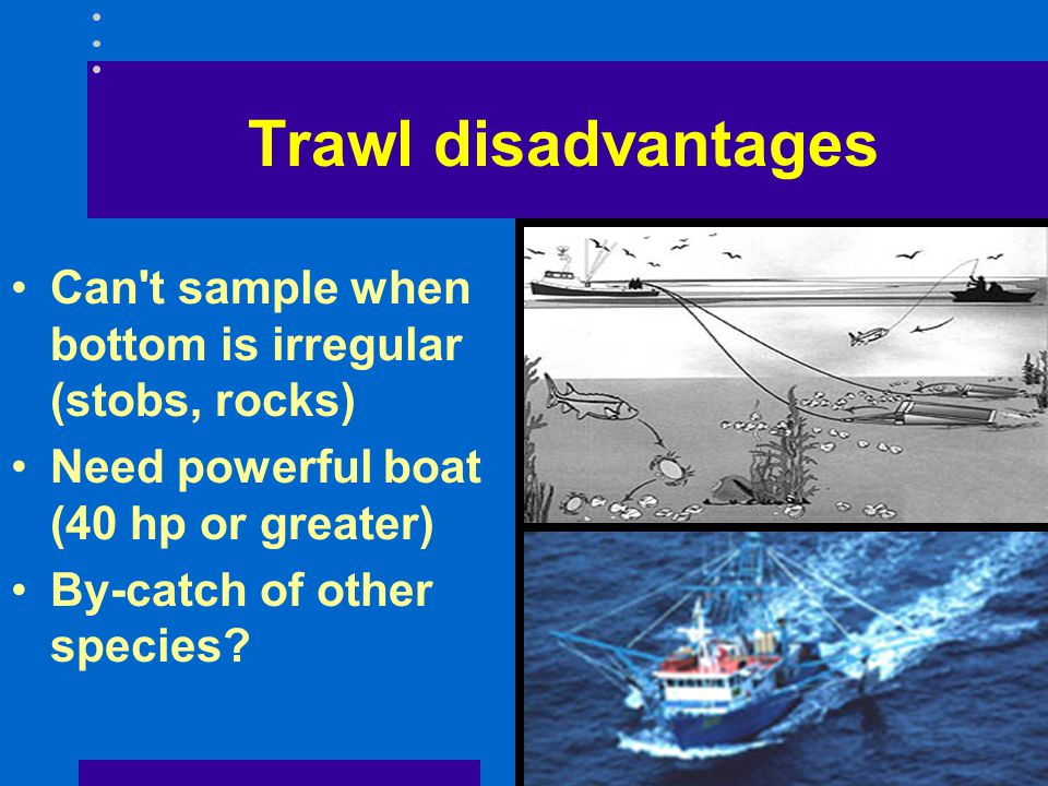 Trawl disadvantages Can't sample when bottom is irregular (stobs, rocks) Need powerful boat (40 hp or greater) By-catch of other species?