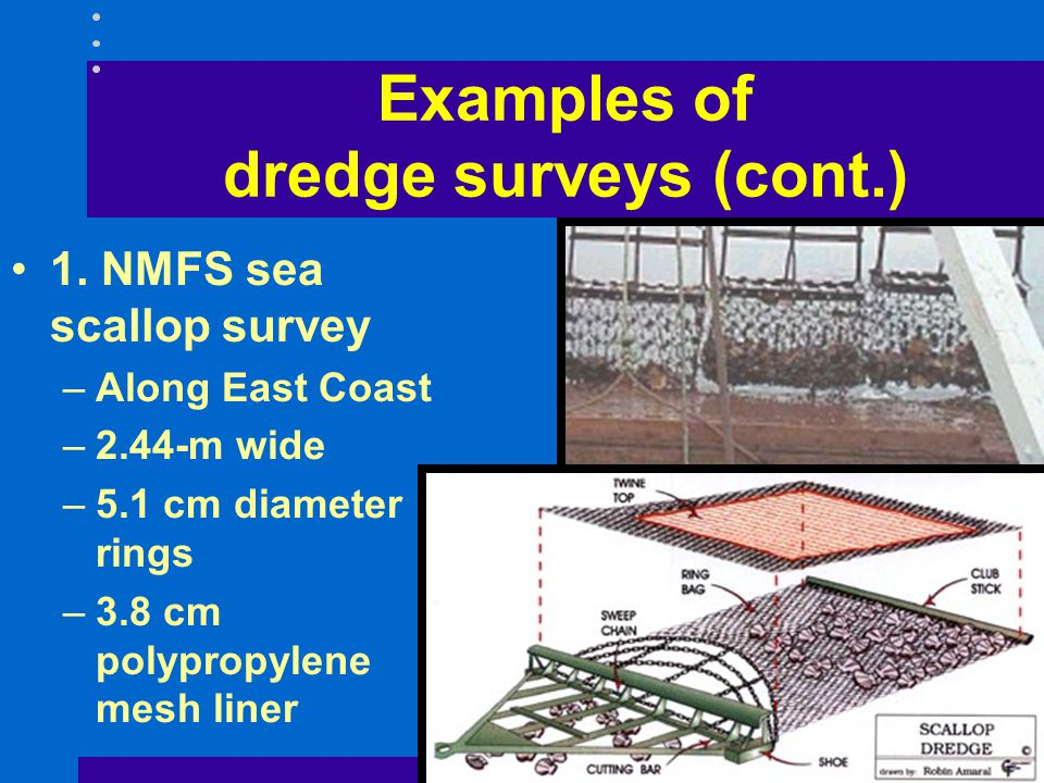 Examples of dredge surveys (cont.) 1. NMFS sea scallop survey –Along East Coast –2.44-m wide –5.1 cm diameter rings –3.8 cm polypropylene mesh liner