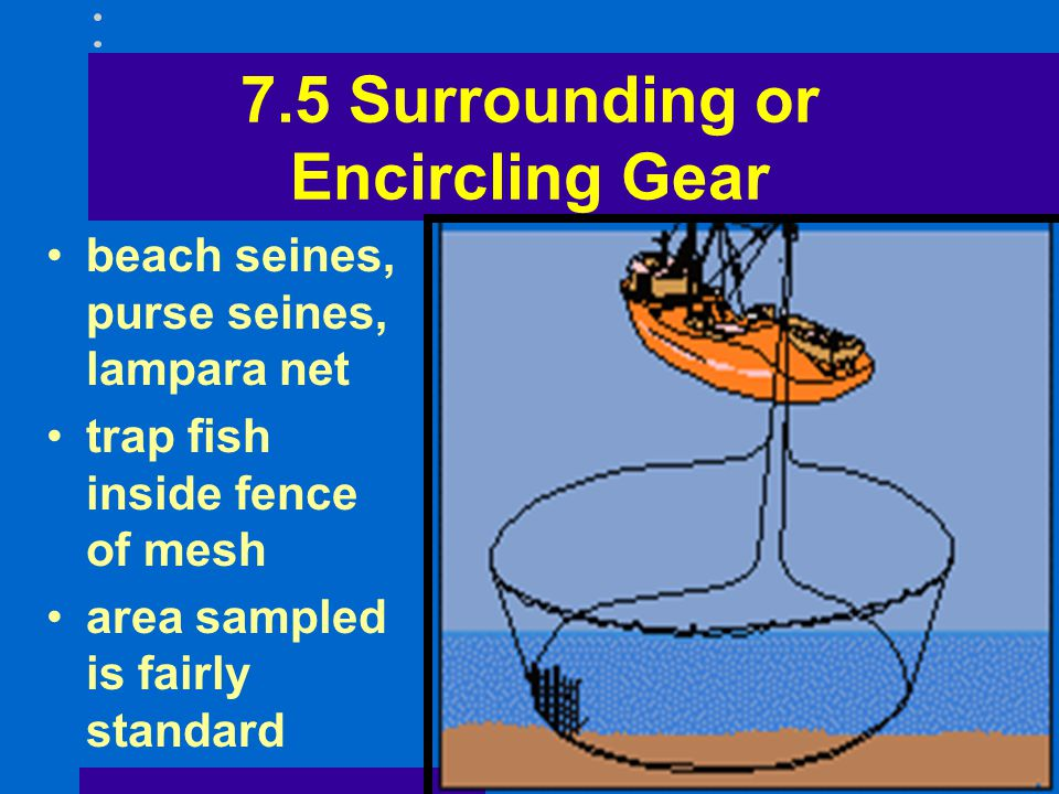 7.5 Surrounding or Encircling Gear beach seines, purse seines, lampara net trap fish inside fence of mesh area sampled is fairly standard