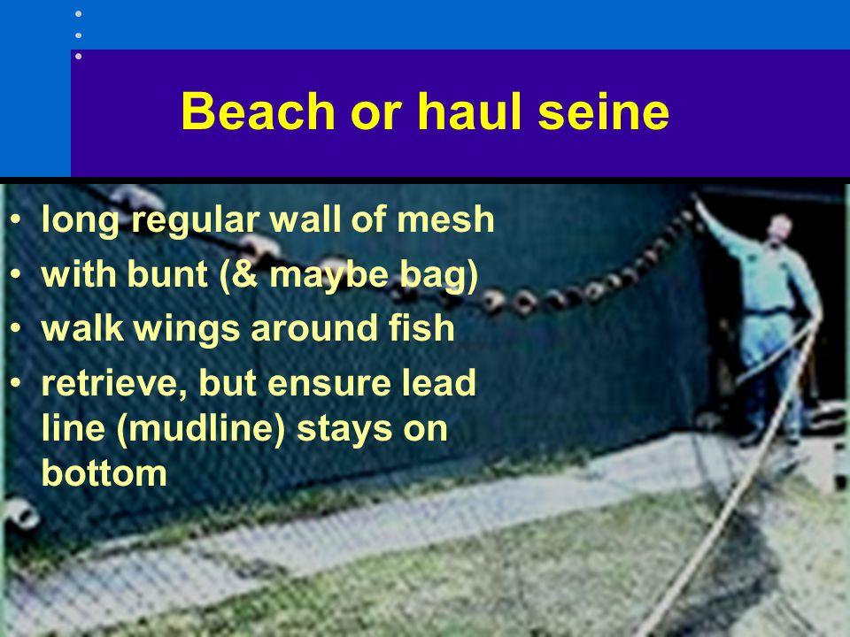Beach or haul seine long regular wall of mesh with bunt (& maybe bag) walk wings around fish retrieve, but ensure lead line (mudline) stays on bottom