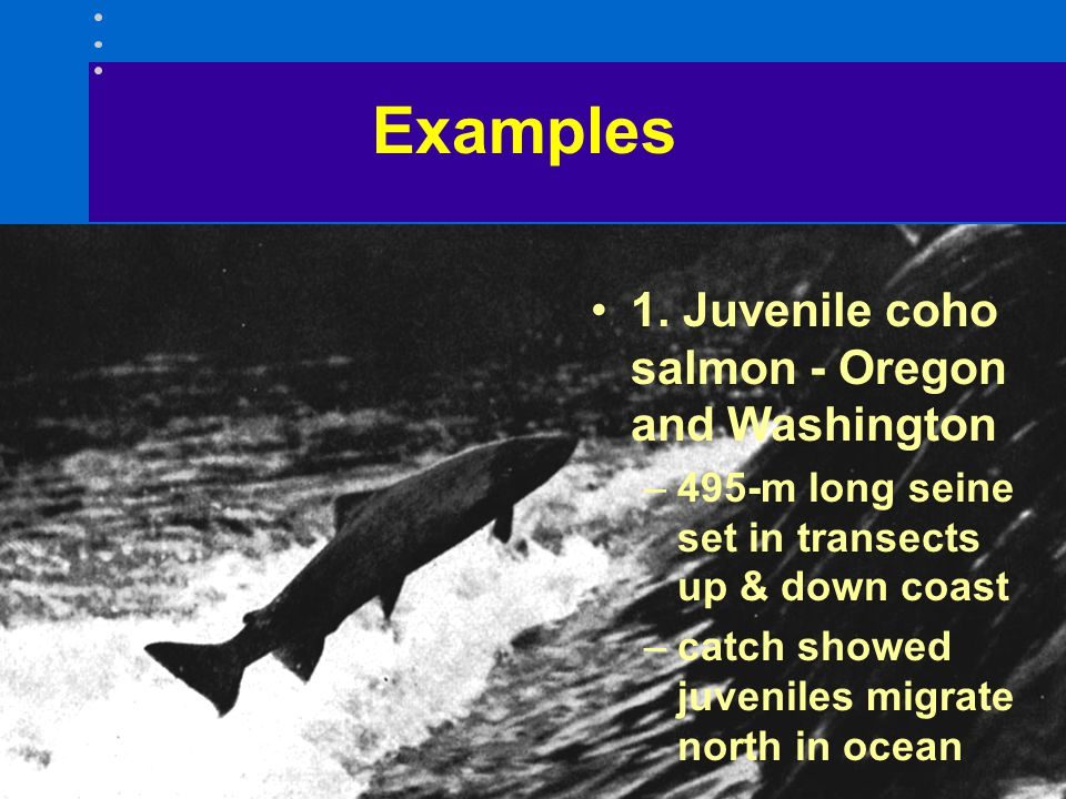 Examples 1. Juvenile coho salmon - Oregon and Washington –495-m long seine set in transects up & down coast –catch showed juveniles migrate north in o