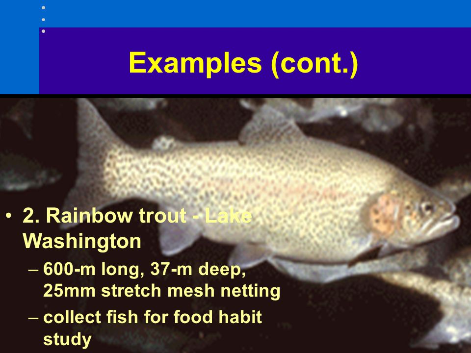 Examples (cont.) 2. Rainbow trout - Lake Washington –600-m long, 37-m deep, 25mm stretch mesh netting –collect fish for food habit study