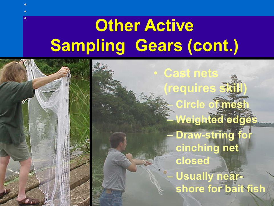 Cast nets (requires skill) –Circle of mesh –Weighted edges –Draw-string for cinching net closed –Usually near- shore for bait fish Other Active Sampli