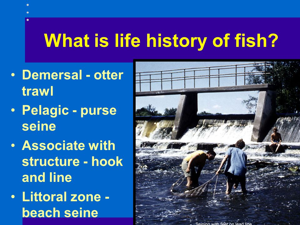 Demersal - otter trawl Pelagic - purse seine Associate with structure - hook and line Littoral zone - beach seine What is life history of fish?