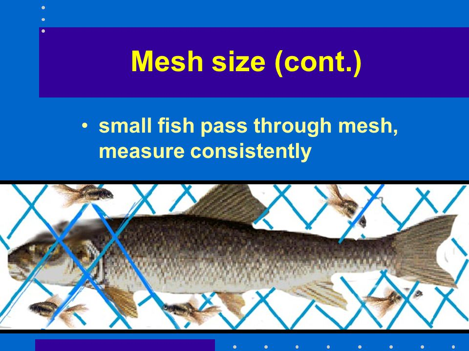Mesh size (cont.) small fish pass through mesh, measure consistently