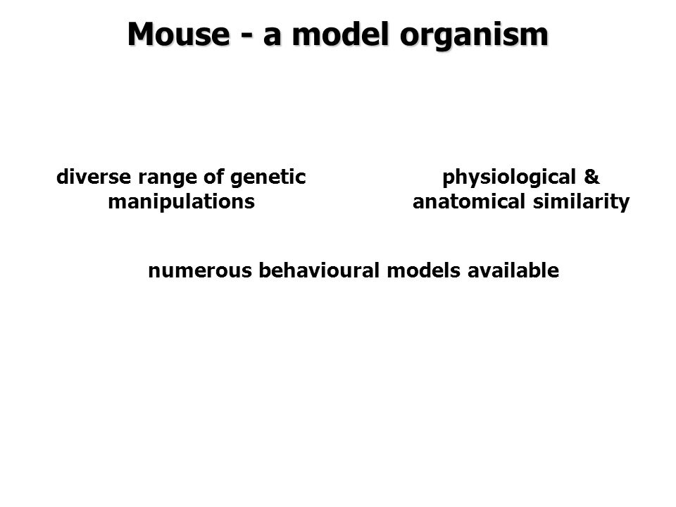 diverse range of genetic manipulations physiological & anatomical similarity numerous behavioural models available Mouse - a model organism