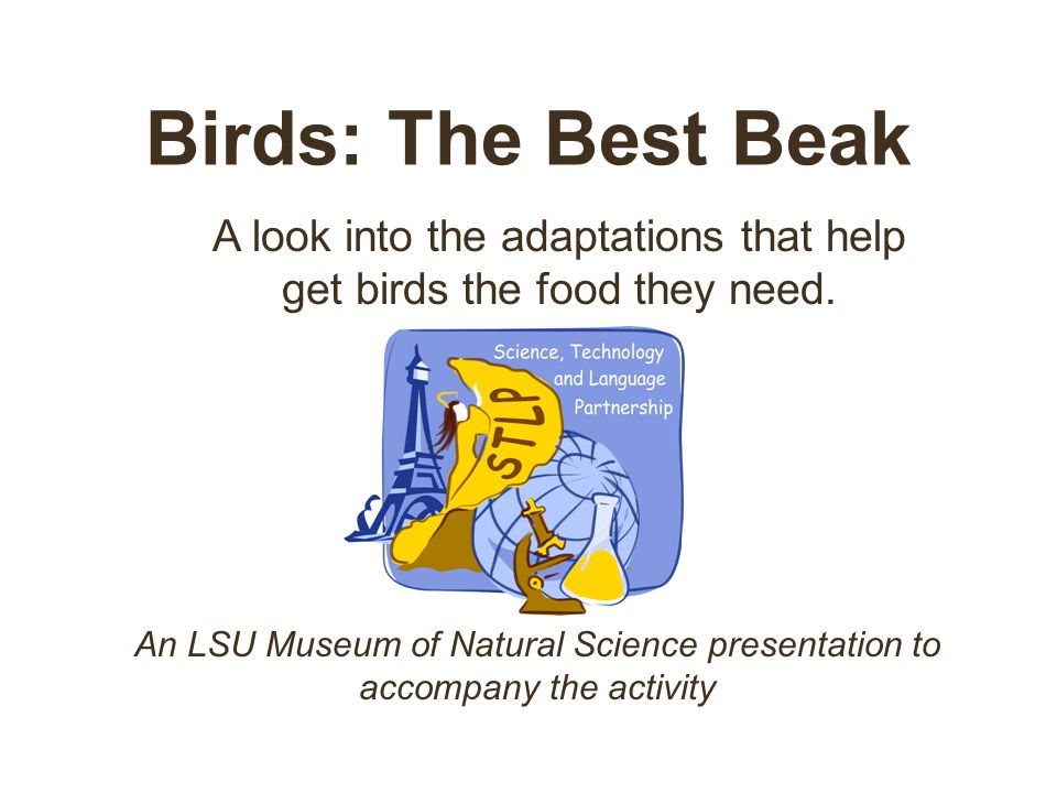 Birds: The Best Beak A look into the adaptations that help get birds the food they need.