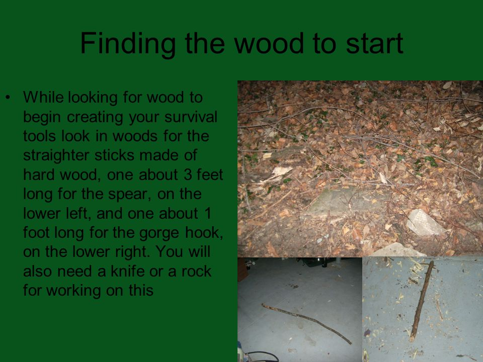 Finding the wood to start While looking for wood to begin creating your survival tools look in woods for the straighter sticks made of hard wood, one about 3 feet long for the spear, on the lower left, and one about 1 foot long for the gorge hook, on the lower right.