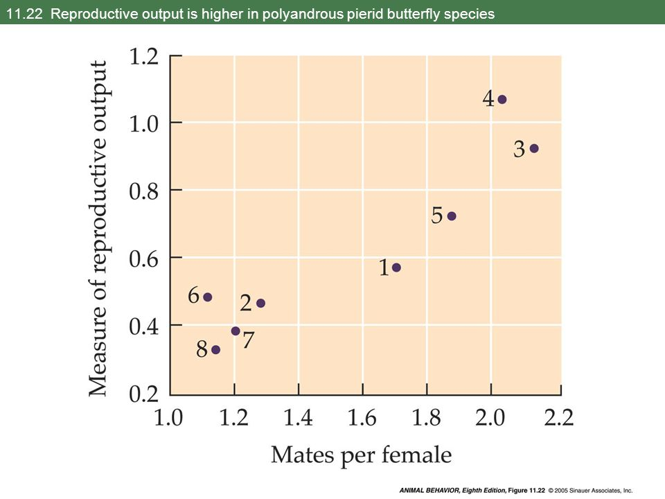 11.22 Reproductive output is higher in polyandrous pierid butterfly species