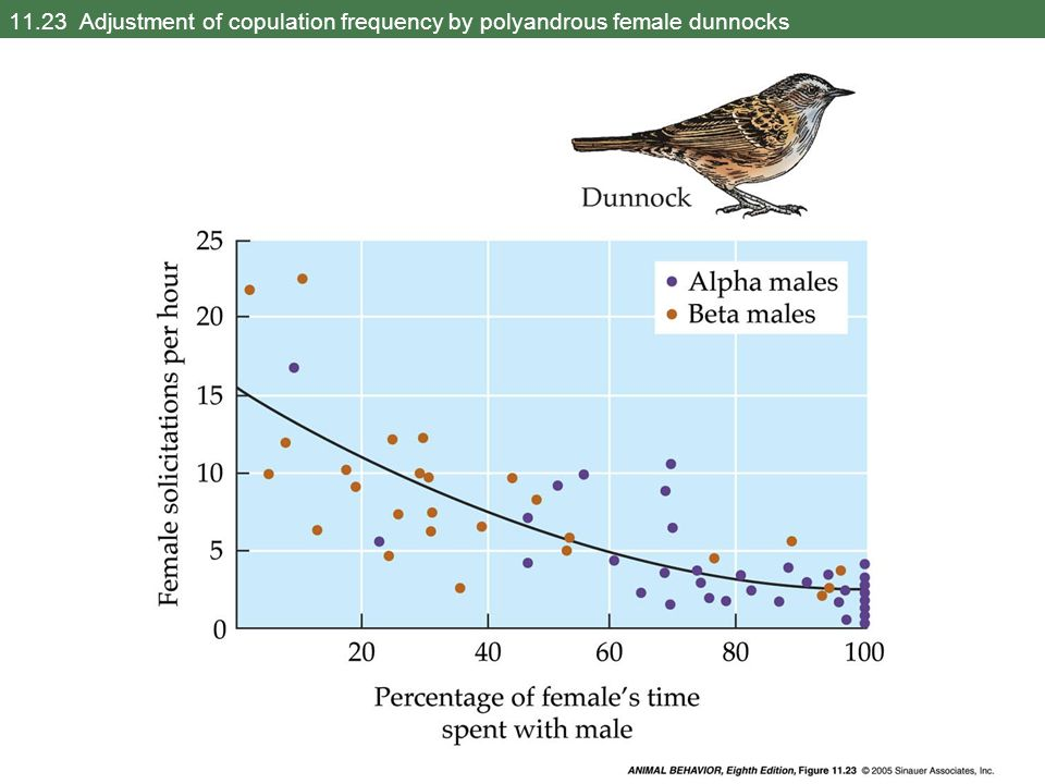 11.23 Adjustment of copulation frequency by polyandrous female dunnocks