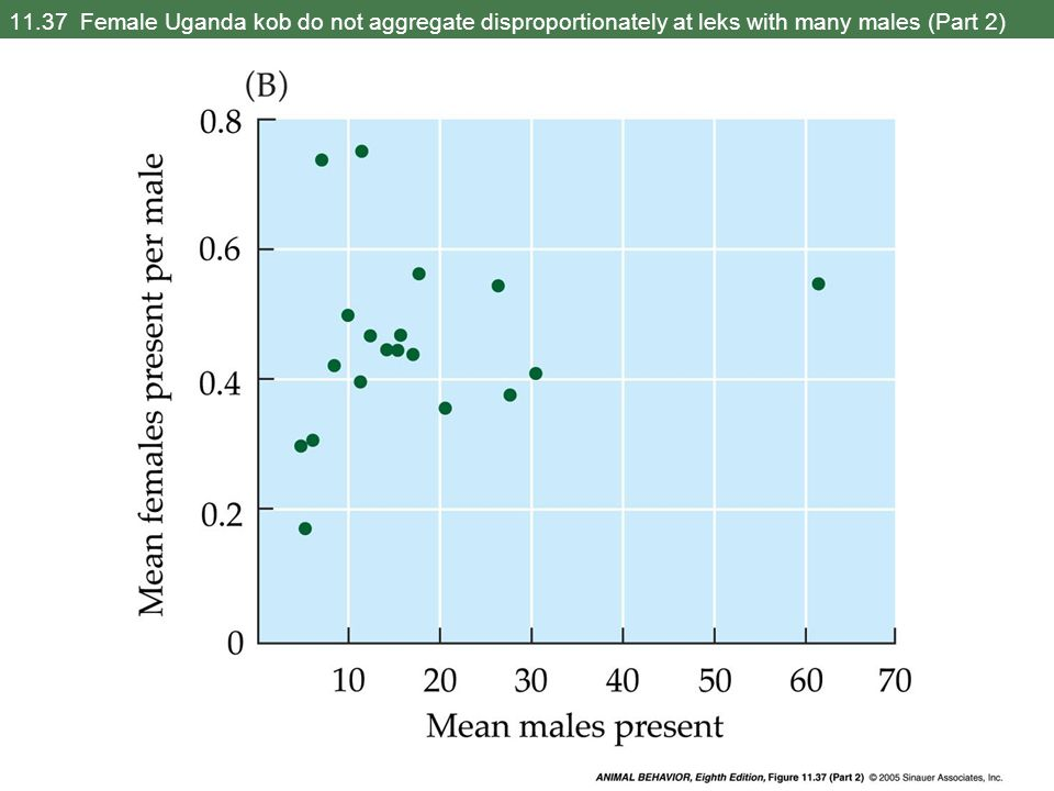 11.37 Female Uganda kob do not aggregate disproportionately at leks with many males (Part 2)