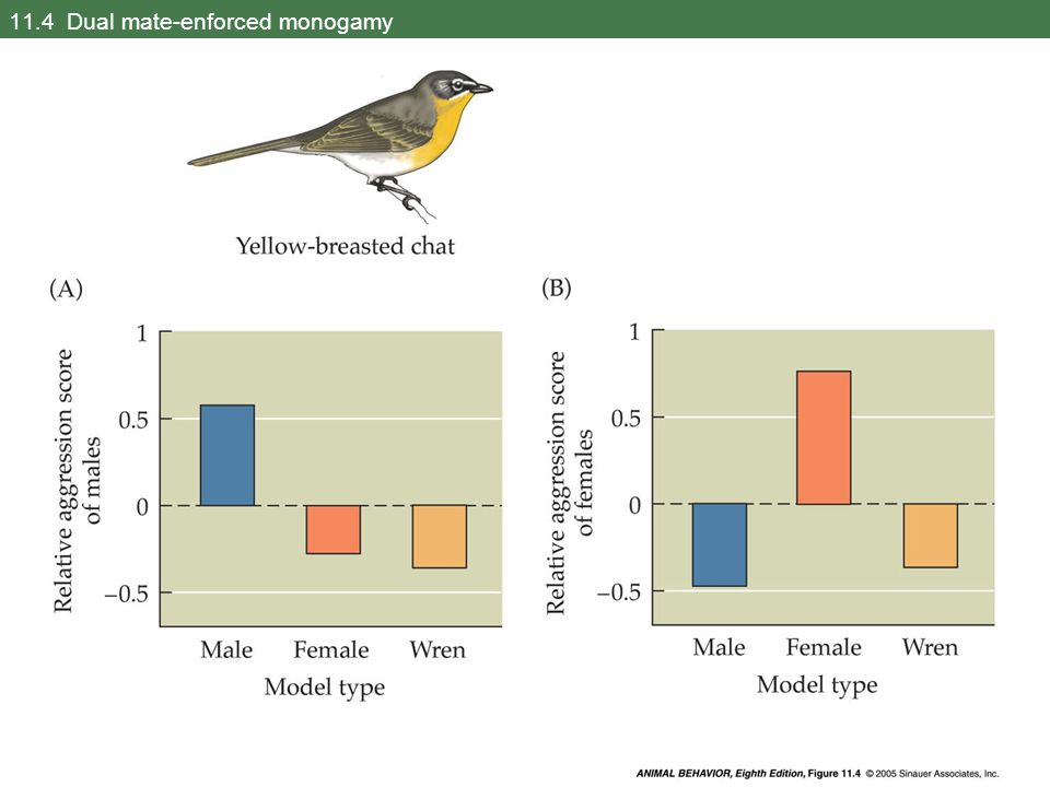 11.39 The ratios of females to signaling males of the Mediterranean fruit fly in two leks (Part 1)