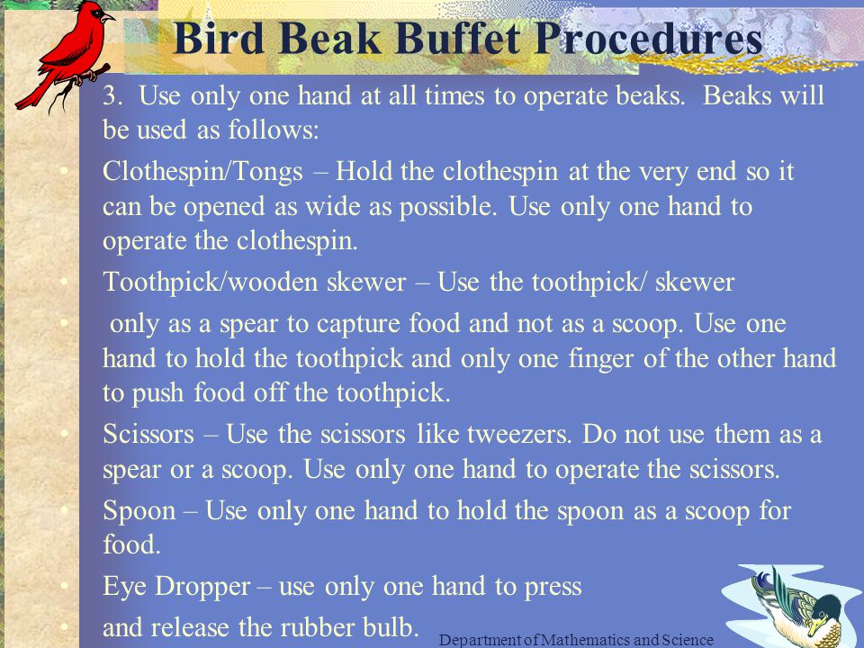 Bird Beak Buffet Procedures 3. Use only one hand at all times to operate beaks.