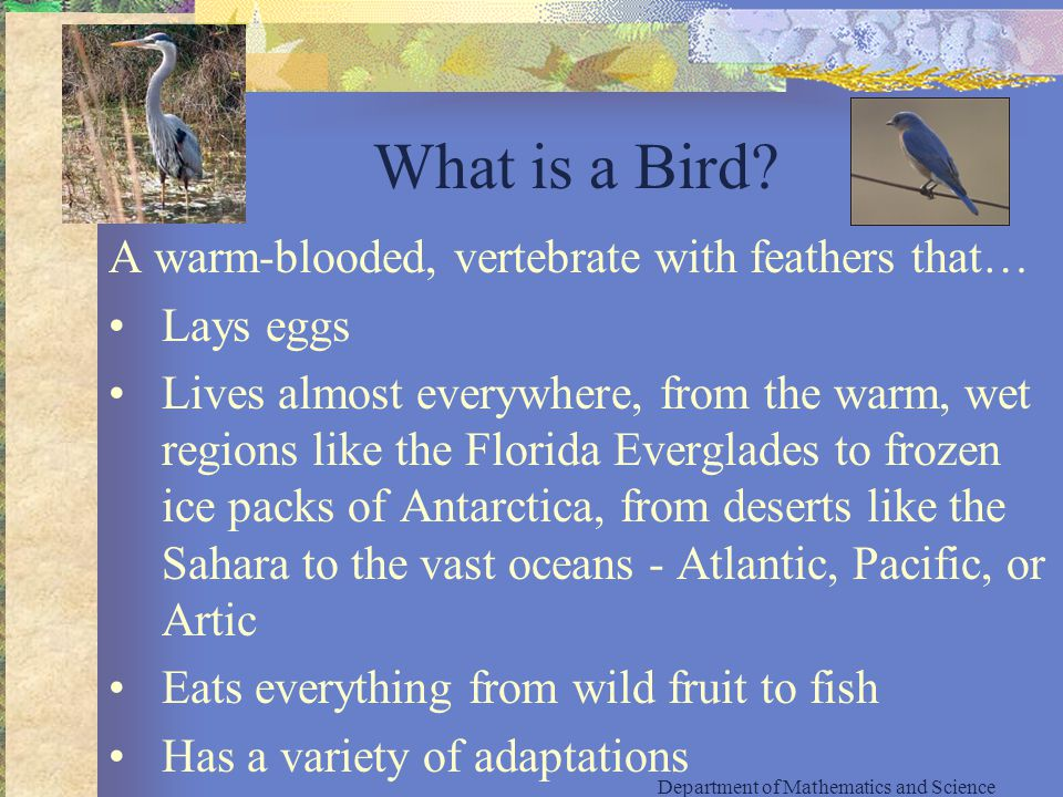 What is a Bird.