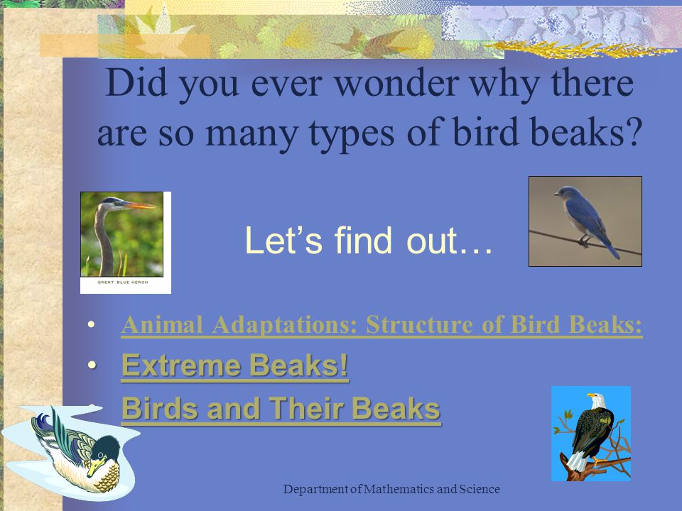 Did you ever wonder why there are so many types of bird beaks.