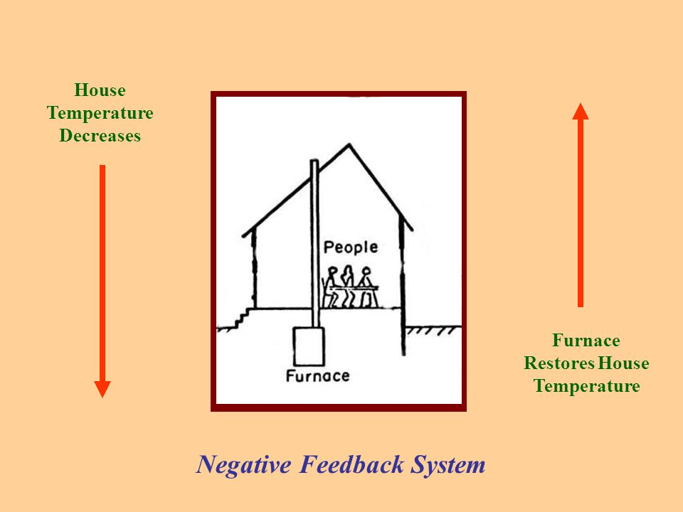 House Temperature Decreases Furnace Restores House Temperature Negative Feedback System