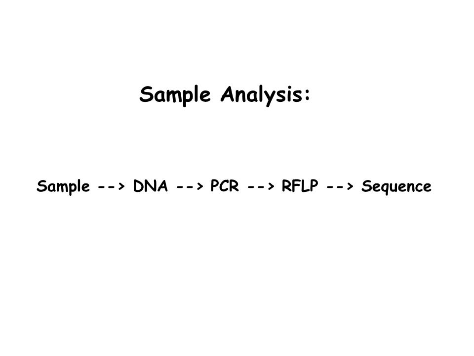Sample --> DNA --> PCR --> RFLP --> Sequence Sample Analysis: