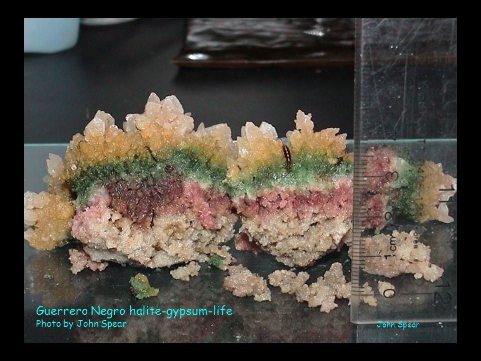 Guerrero Negro halite-gypsum-life Photo by John Spear John Spear