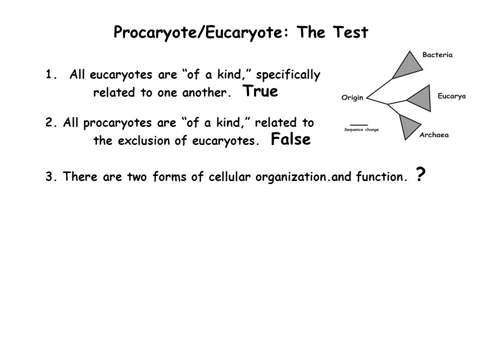 Procaryote/Eucaryote: The Test 1.All eucaryotes are of a kind, specifically related to one another.