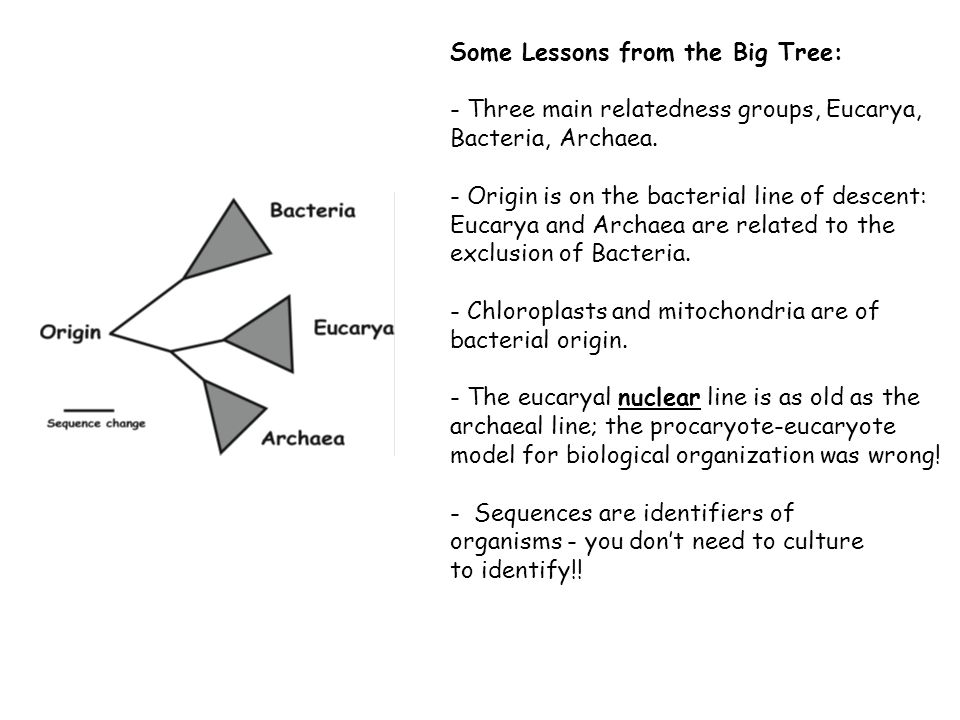 Some Lessons from the Big Tree: - Three main relatedness groups, Eucarya, Bacteria, Archaea.
