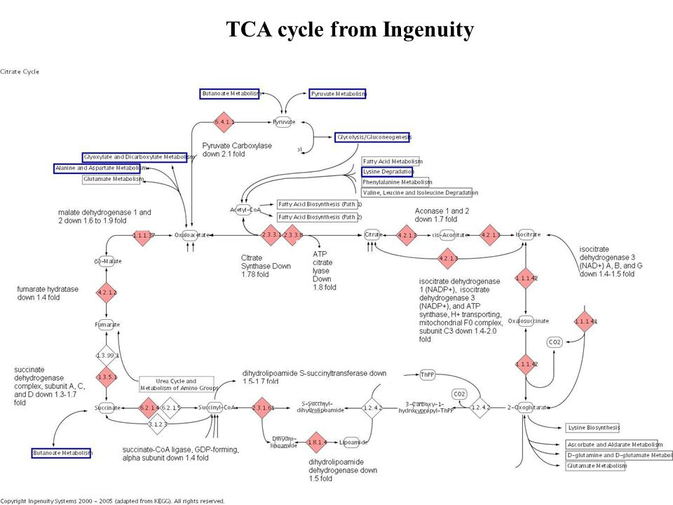 TCA cycle from Ingenuity